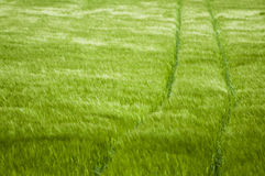Field. View of a green field Royalty Free Stock Images