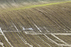 Field. Detail of wet field with plash Royalty Free Stock Photo