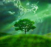 In the field. Photomanipulation of a green field and a solitary tree Royalty Free Stock Photography
