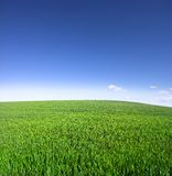 Field. It's a photo of a green field on a sunny day Royalty Free Stock Photography