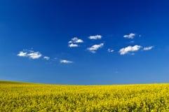 Field. Yellow field under blue sky Royalty Free Stock Photo