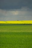 Field. Cloud, country, countryside, field, flower, grass, green, hill, landscape, plant, rain, scene, scenery, storm, summer, tree, yellow Stock Images