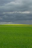 Field. Cloud, country, countryside, field, flower, grass, green, hill, landscape, plant, rain, scene, scenery, storm, summer, tree, yellow royalty free stock photography