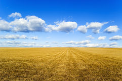 The field. This is an autumn field on background blue sky Royalty Free Stock Photography