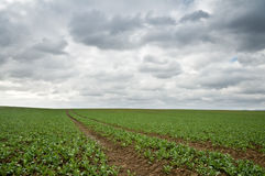 Field Stock Images