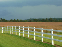 Field 1b. Sunny field of grain and grass with white fence and dark sky royalty free stock images