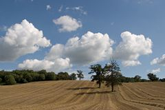 Field 2. Pair of trees in wheatfield after harvest Royalty Free Stock Photos