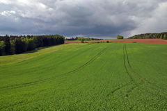 Field. And forest before storm royalty free stock image