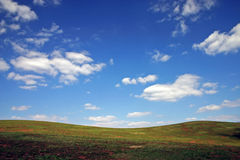 Field. Green grass-field and clouds on blue sky stock image