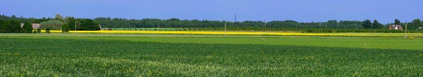 Field Royalty Free Stock Photo