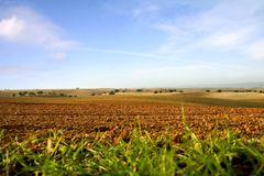 Field. For growing in Alentejo, Portugal Stock Images