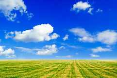 The field. The field and white clouds Stock Image