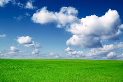 The field. The spring field and blue sky Royalty Free Stock Photo