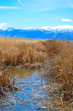 Field. This is a marsh in northern california Stock Images