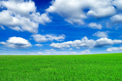 The field. The green field and sky Royalty Free Stock Photos
