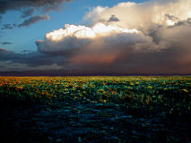 The field. Grassy field before the storm Stock Photo