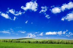The field. The field and blue sky Royalty Free Stock Photography