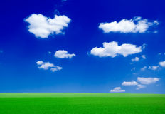 The field. The green field and white clouds Royalty Free Stock Image