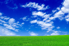 The field. The green field and blue sky Stock Photography