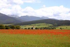 Field. Of poppy Stock Photography