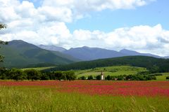 Field. Of poppy Stock Photo