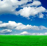 The field. Royalty Free Stock Photos