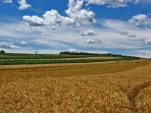 Field. Summer wheat field in Austria royalty free stock image