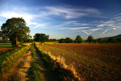 Field. Morning landscape Royalty Free Stock Photo