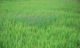 Field. Green field Stock Photography