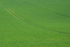 Field 47 Stock Image