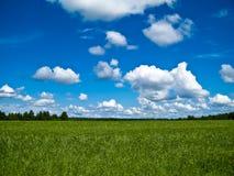 Field. Landscape, a summer field in a Russian village stock photo
