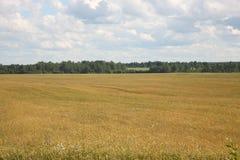 The field. In Russia, rural landscape, nature Stock Photo