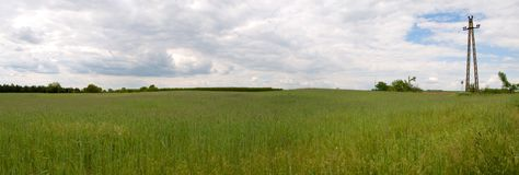 Field. Panorama of green field with sky Royalty Free Stock Photo