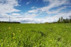 Field. Landscape Stock Photo