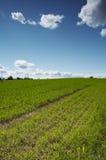 Field. Landscape Royalty Free Stock Image