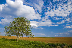 Field. Tree and a plowed field Stock Photos