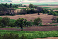 Field. S of wheat and crop in Vojvodina - Serbia Stock Photos