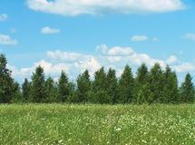 Field. Tree, sky Royalty Free Stock Images