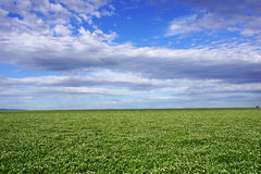 Field against sky, agriculture and farming land with sky and clouds in Victoria, Australia. Stock Image