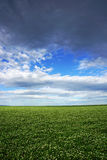 Field against sky, agriculture and farming land with sky and clouds in Victoria, Australia. Royalty Free Stock Photos