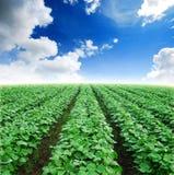 Field agiculture green grass Stock Photo