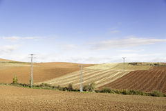 Field of agriculture Royalty Free Stock Photography