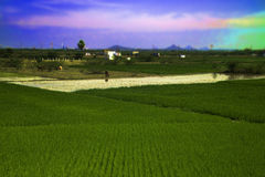 Field of agriculture in India Stock Image