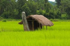 Field, Agriculture, Paddy Field, Grassland royalty free stock photos