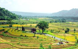 Field, Agriculture, Paddy Field, Hill Station stock photo