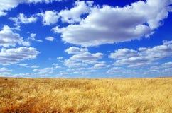 Field at Alentejo region Stock Image