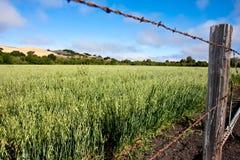 Field of alfalfa stock photography