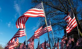 Field of American Flags Stock Photos