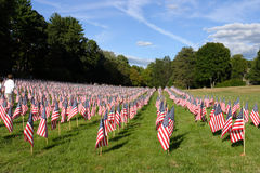 Field of American Flags Royalty Free Stock Image