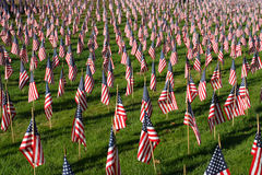 Field of American Flags Stock Image